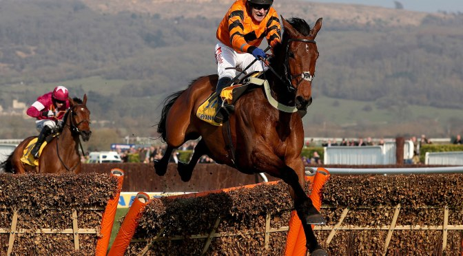 Stayers Hurdle Profiles